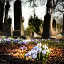 Cemetery Maintenance Grant Scheme Extended to 19th April 2021